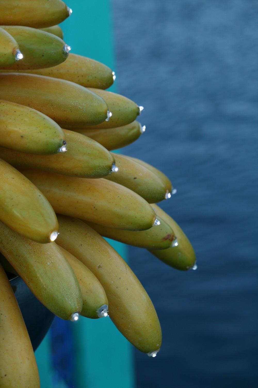 tuttifrutti_bananalights
