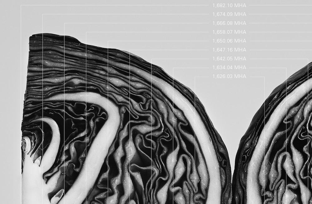 Gemma-Warriner-Cabbage-Detail