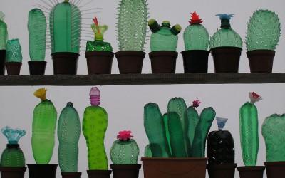 food-design-bottle-cactus