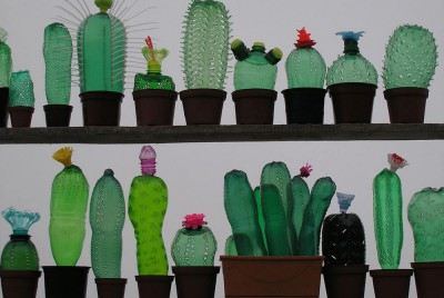 food-design-bottle-cactus