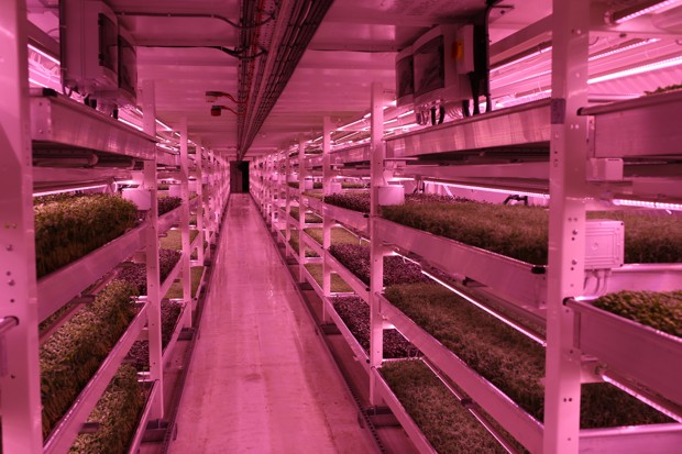 food-design-underground-farm