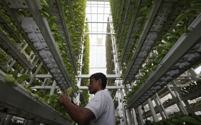 Sky Greens, the world's first low carbon, hydraulic vertical farm. Winner of 2015 Index: Award. Image courtesy of Edgar Su / Reuters