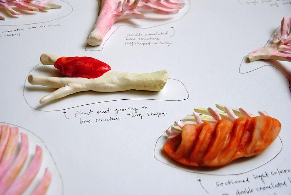 vogelzang-plant-bones-4
