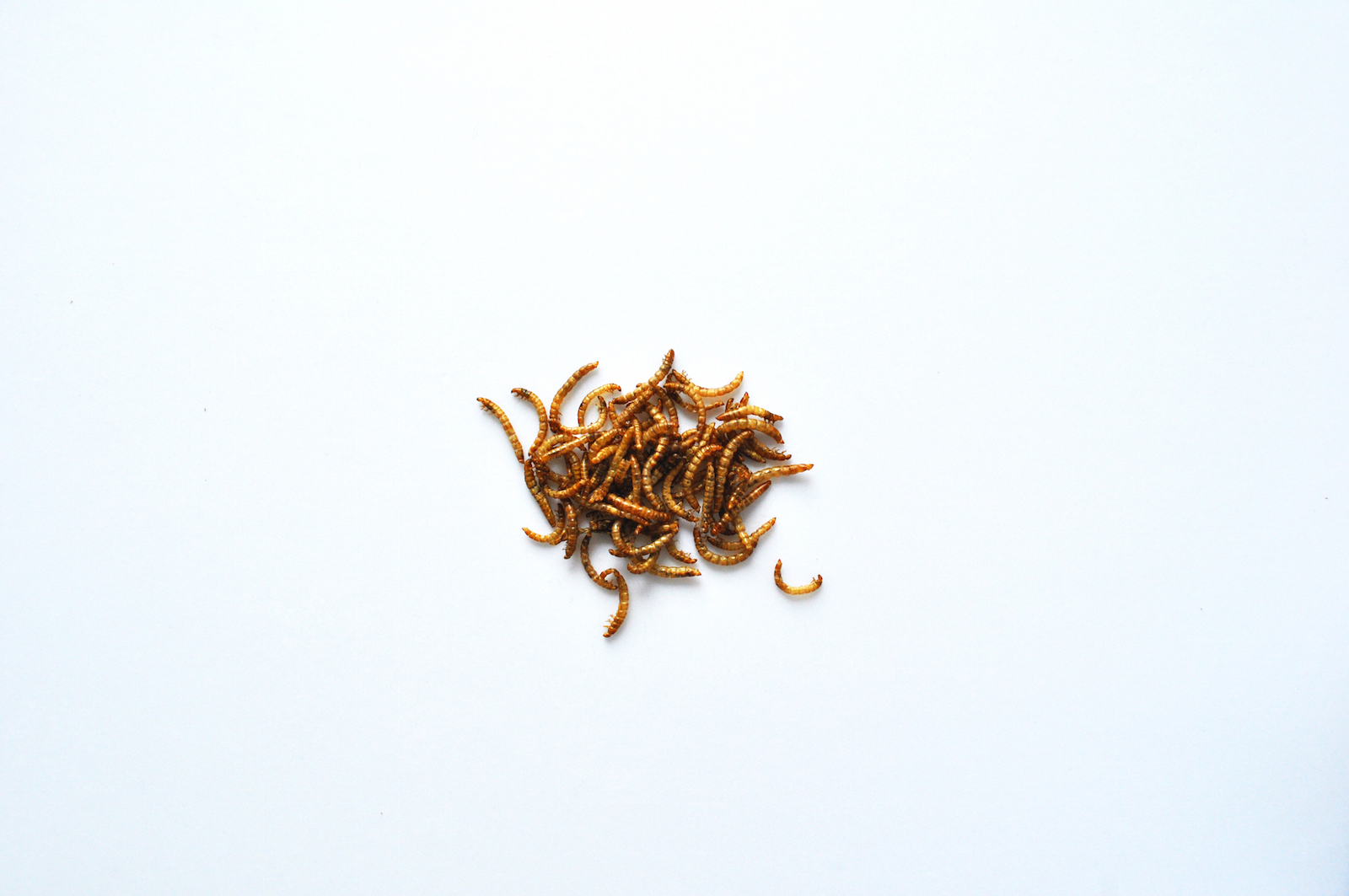 Livin-Farms-Hive-Mealworms