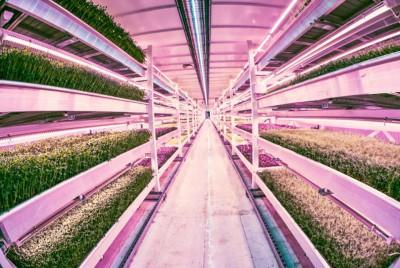 growing-underground
