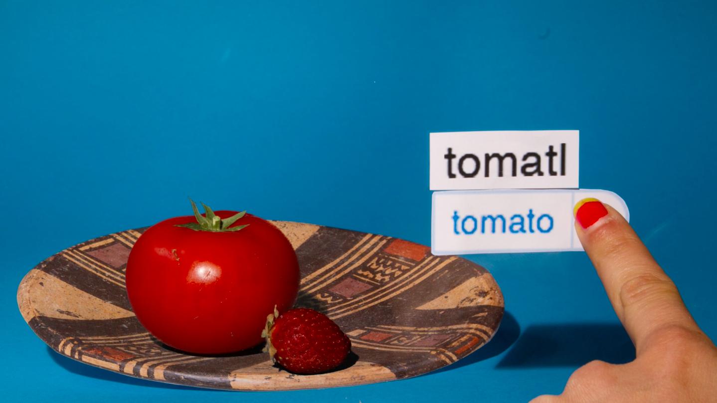 Tomato_CaitlinCraggs_autocorrect