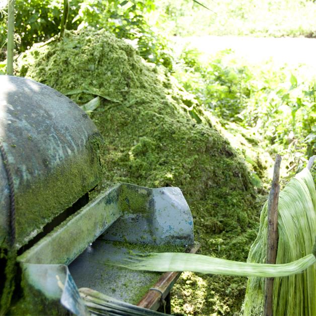 pintaex-harvest