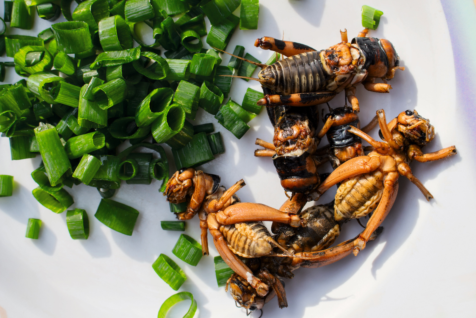 The Nordic Food Lab S Guide To Eating Insects And