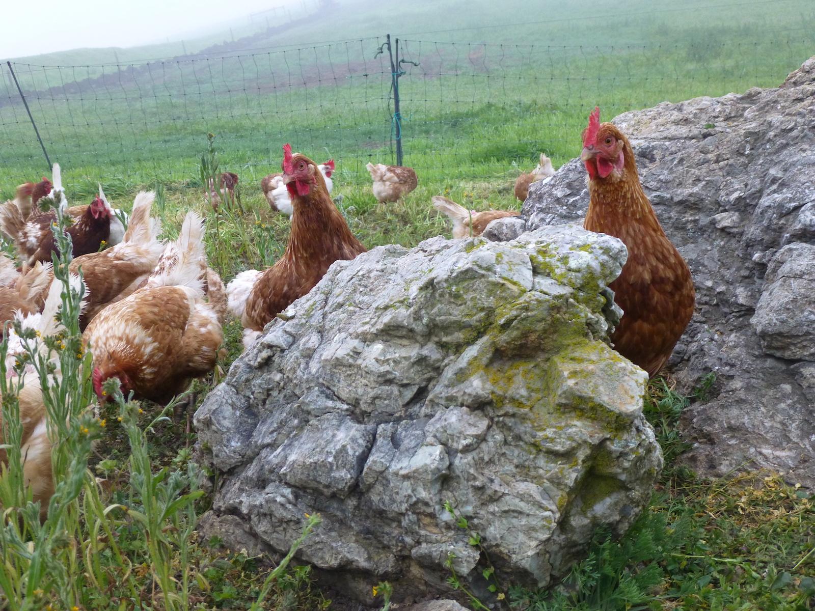 Two Rock Farms_1_credit-Edward Silva
