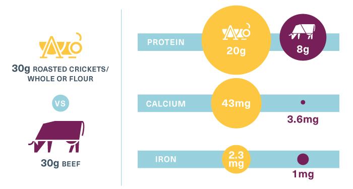 cricket-nutrition-graphic