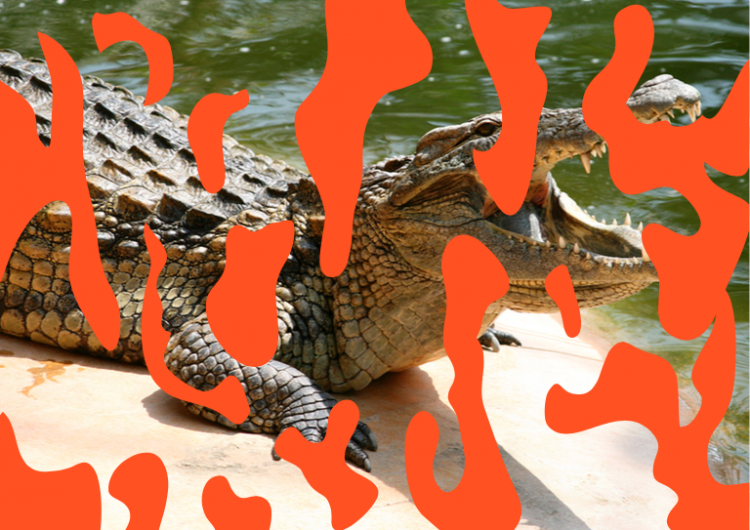 What a croc an australian art collective s take on for Cuisine a crocs