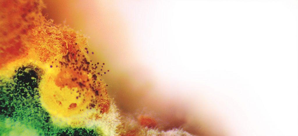 Moldy millet as seen through a stereoscope.